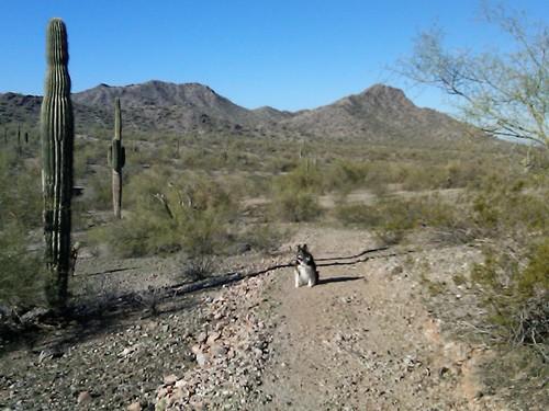 Manny in the desert.jpg