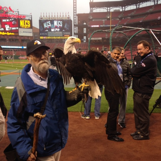 "Here's ""Louis"" the bald eagle that made an appearance during Game Two's pregame festivities"
